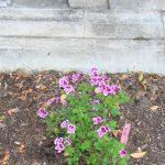 FtnWlk_Plants_24Aug2015