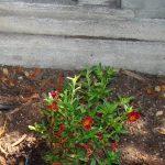 FtnWlk_Plants_24Aug2015 (2)